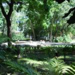 I 470 anni del Giardino dei Semplici