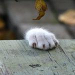 Tanto va la gatta al lardo che ci lascia lo zampino.