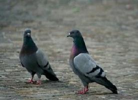 Prendere due piccioni con una fava.