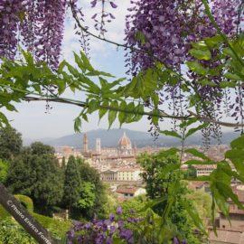 Firenze attraverso i Glicini del Giardino di Villa Bardini.
