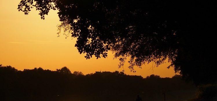 Sul calar della sera lungo l'argine delle Cascine.