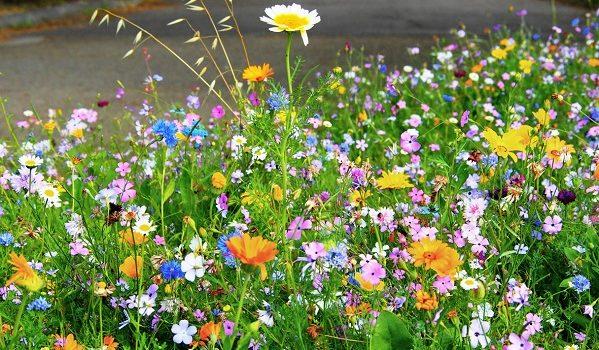 Le Cascine in fiore.