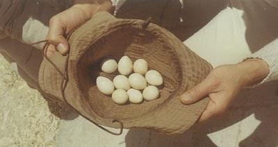 E lunedì andiamo a ruzzolare le uova…