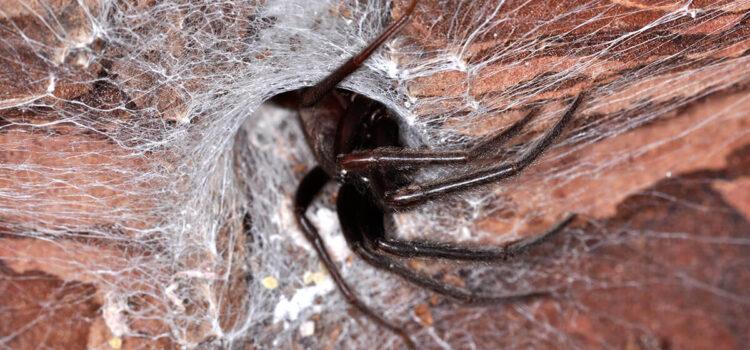 Non cavare un ragno dal buco